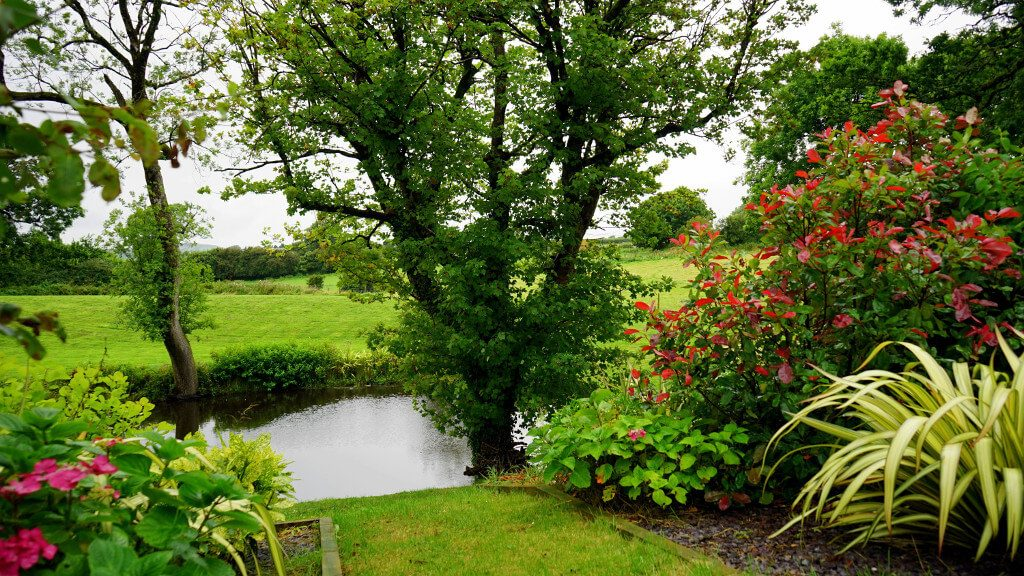 Bloom garden pond