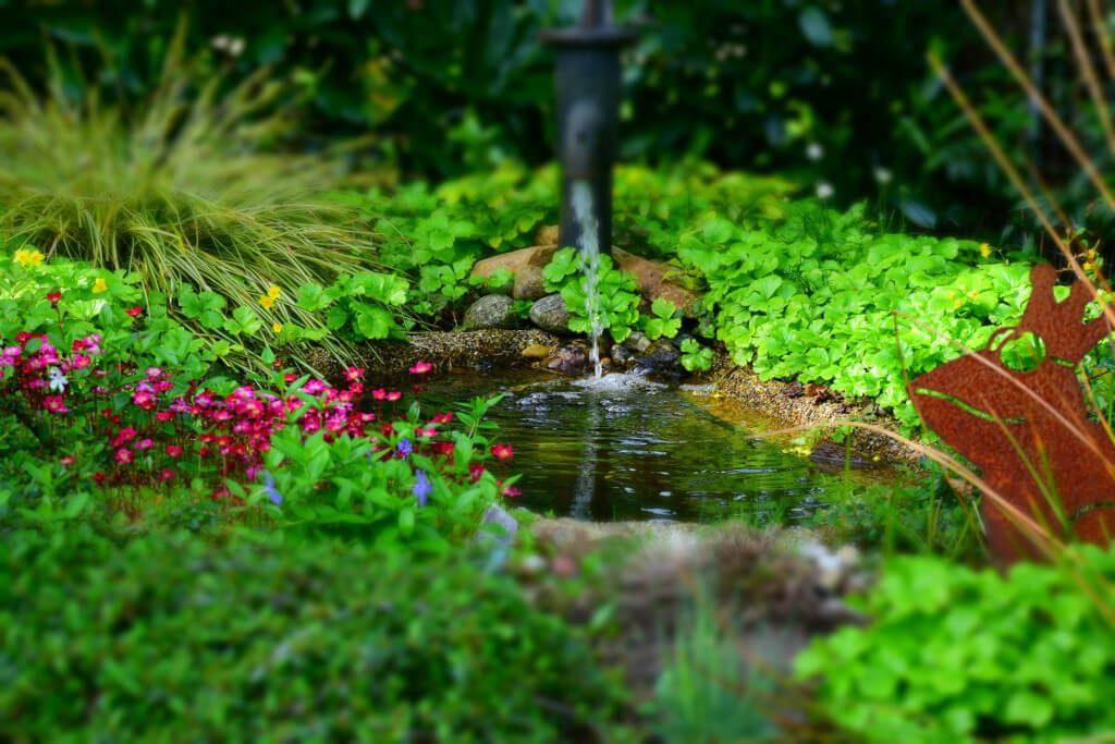 Nature backyard pond